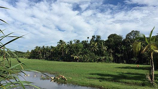 南インドの自然豊かな 最高のロケーション